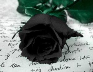 especies-de-flores-negras-beleza-exotica-e-rara-9
